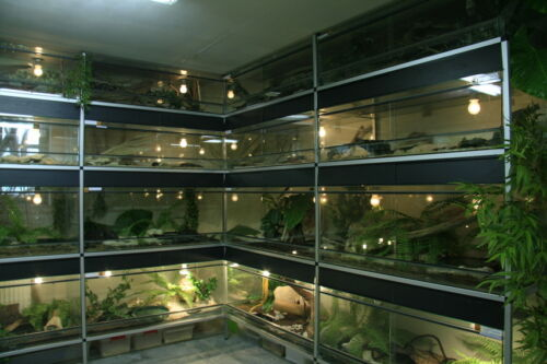 Vivarium Buying Guide Ebay