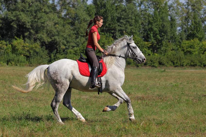 What to Consider When Choosing a Prestige Saddle