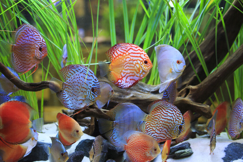 Top 10 fish tanks ebay for Best community fish