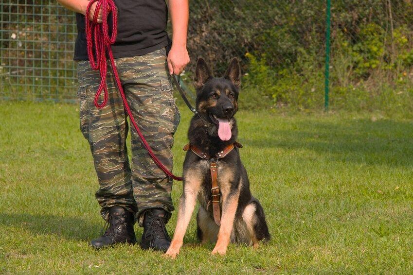 How to Use a Training Line Dog Lead