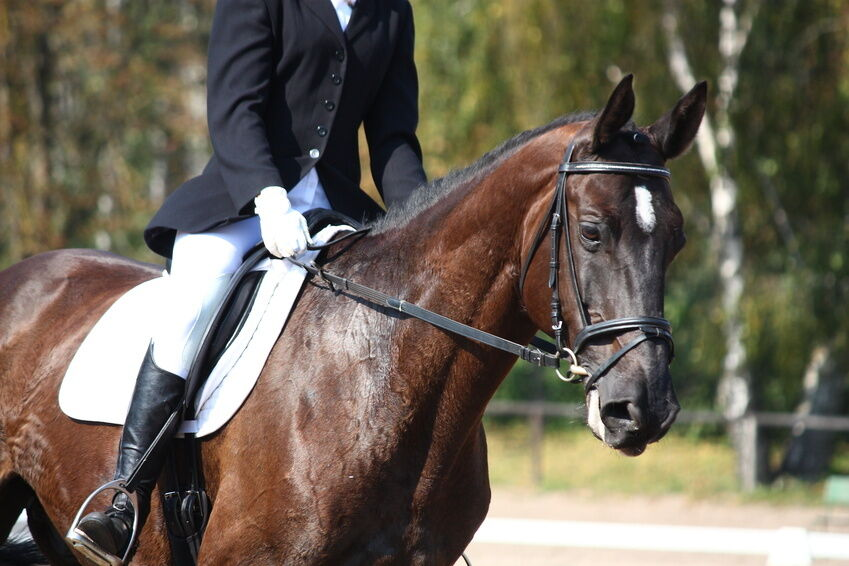 How to Attach Reins to a Bridle