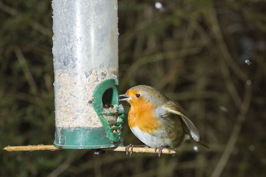 How to Attract Wild Birds to a New Feeder
