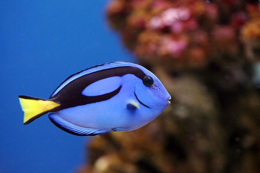 Die beliebtesten meerwasser zierfische ebay for Aquarium fische arten