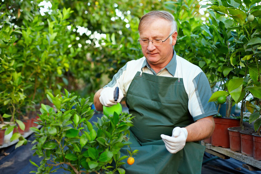 Tips for Potting a Citrus Plant