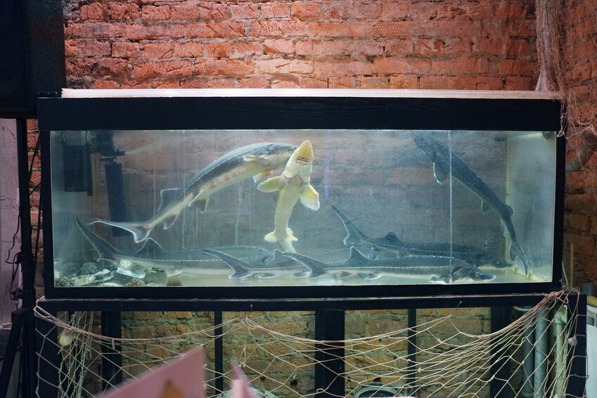how to make an aquarium canopy ebay. Black Bedroom Furniture Sets. Home Design Ideas