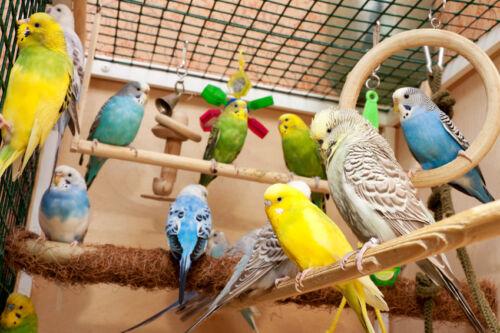 Das passende Käfigzubehör für die Vogelhaltung auswählen