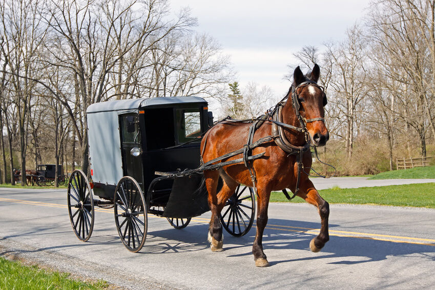 How to build a horse carriage ebay for How to build a carriage