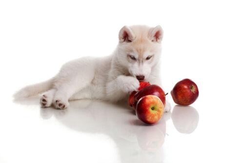 Kräuter, Früchte, Nüsse und mehr: Mit diesen Leckereien verwöhnen Sie Kleintiere gesund