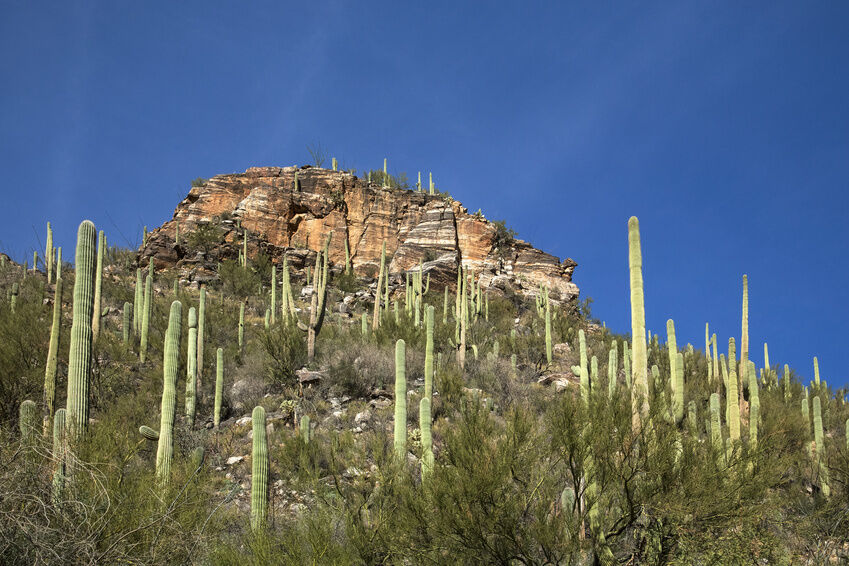 Top Things To Do In Tucson AZ EBay - 10 things to see and do in tucson