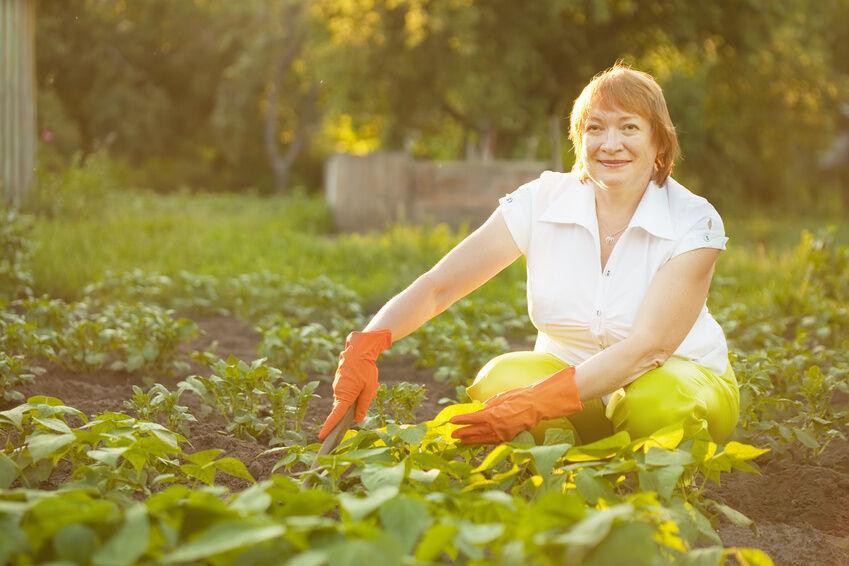 Das interessiert mich die Bohne: kleine Pflanzenkunde