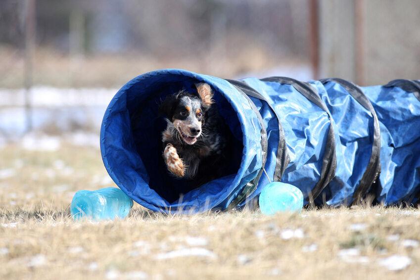 Dog Training Equipment Buying Guide