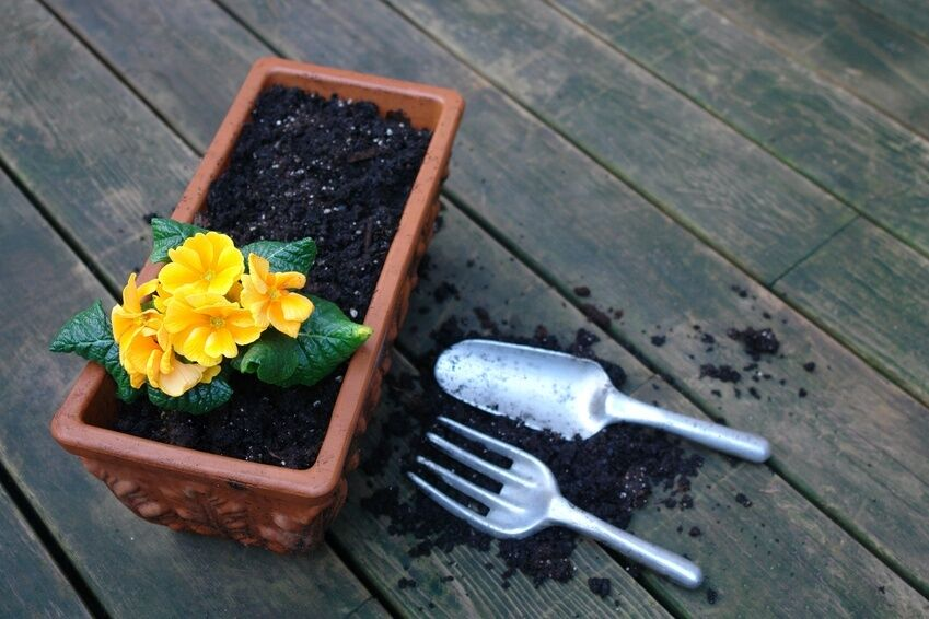 How to Pick the Right Potting Mix for Your Plant