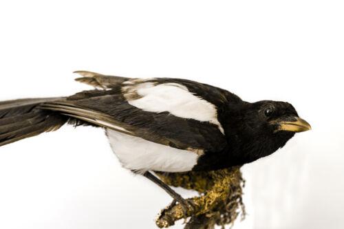Bird Taxidermy Buying Guide