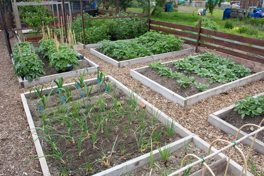 Ideas for Using Bark Chips on Your Allotment | eBay