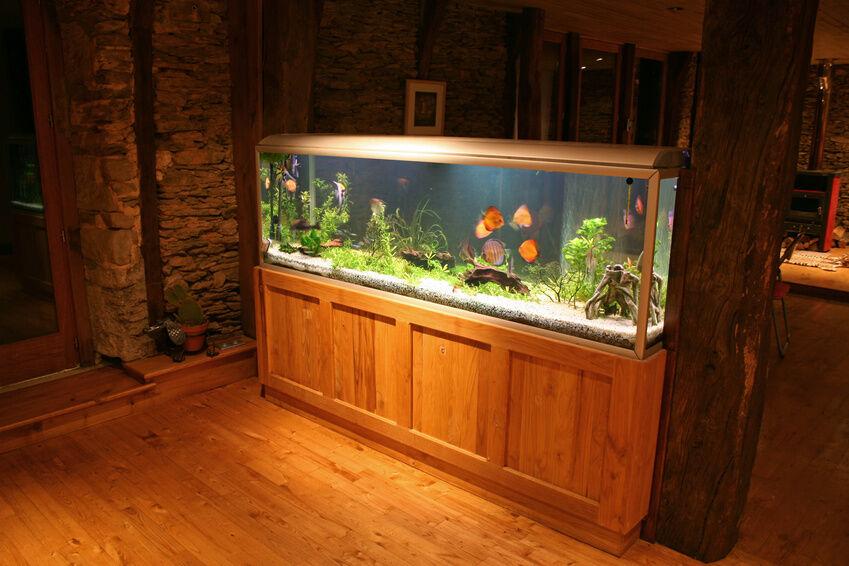 So erzielen Sie besondere Licht-Effekte in Ihrem Aquarium
