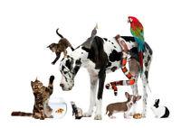 Premium Pet Boarding!