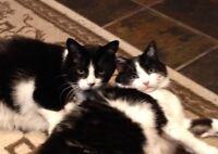 Two amazing twin cats in need of a new loving home