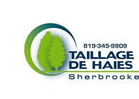 Taillage de haies sherbrooke (abattage/émondage)