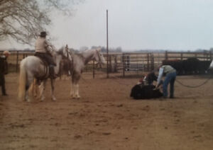HORSE TRAINER ( 10+ YEARS EXPERIENCE )