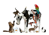 Veterinary Assistant Needed ASAP