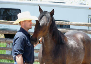 Liberty Horse Training Clinic !!!  (Others also available)