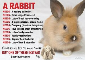 TO ANYONE LOOKING TO BUY A RABBIT