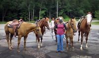 Horse Group Trips