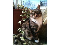 """Short haired Tabby cat to loving """"child free' quiet home."""