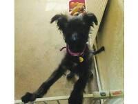 6 month old puppy