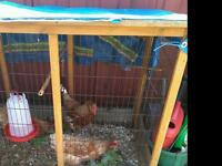 Chickens, coop and many extras