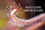 hccarnivorousplants