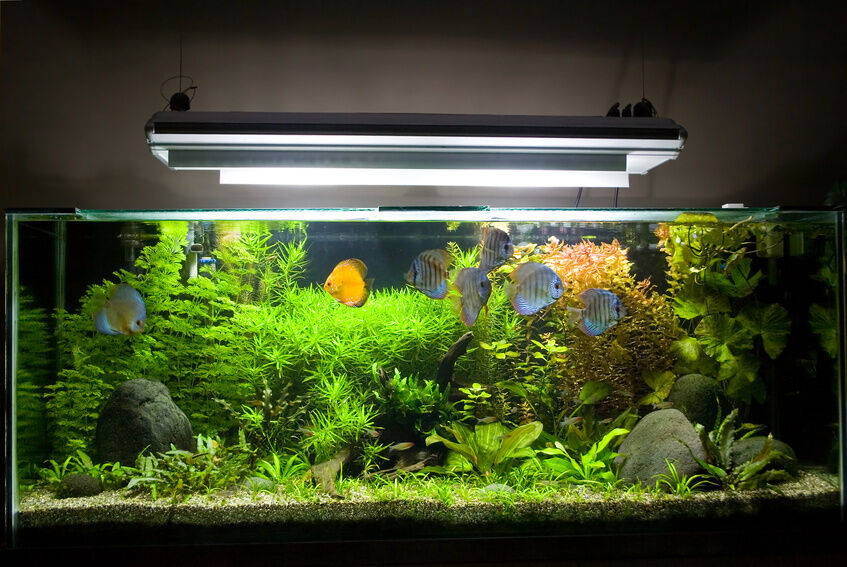 How To Test Fish Tank Water Ebay