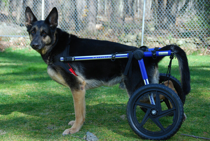 How to Build a Dog Wheelchair