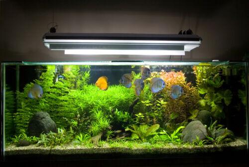 Build Your Own Acrylic Fish Tank Kit