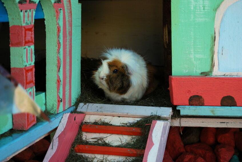 Platz für Ihren Liebling: Welchen Stall braucht Ihr Haustier