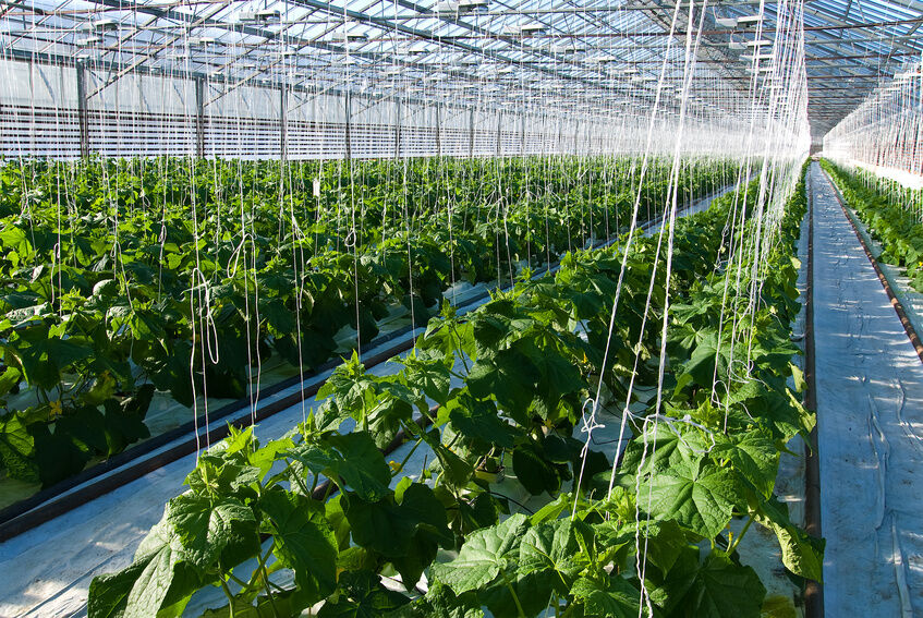 How to Choose the Right Digital Ballast for Your Hydroponics