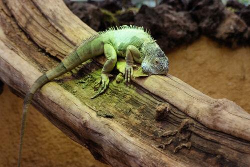 Alles über Reptilien in Sachbüchern und Ratgebern lesen