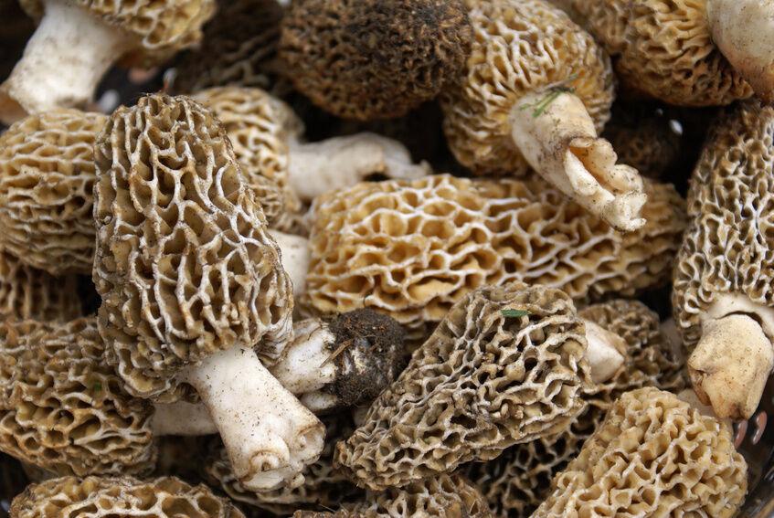 how to make sawdust mushroom spawn