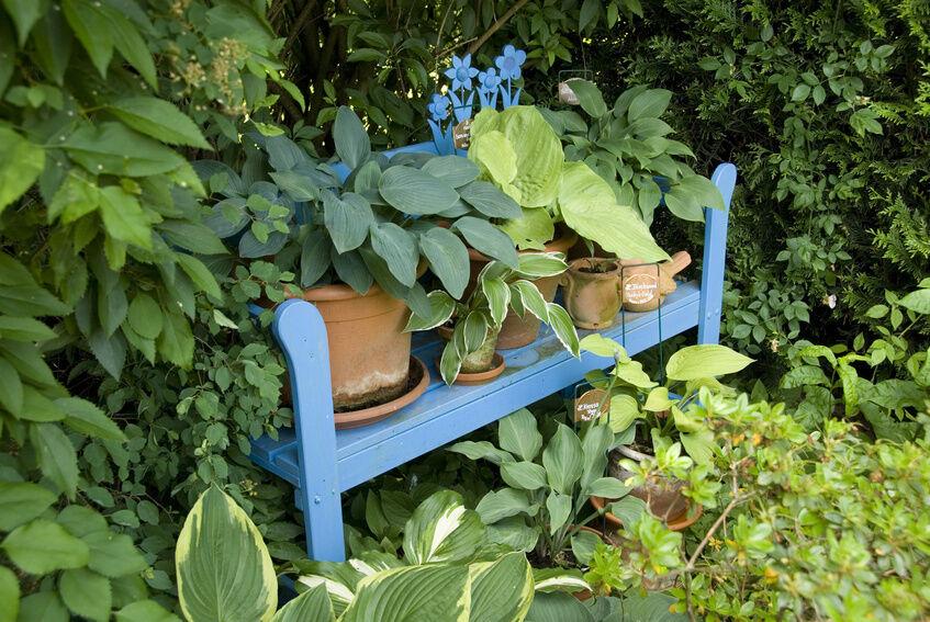 Welche Schattenpflanzen passen in Ihren Garten?