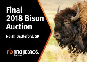 Back to Grass Bison Auction - May 9, North Battleford