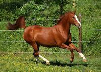 Love to work around Horses