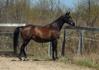 Free breeding lease available