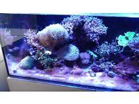 Evolution Aqua reef pro 1200 full set up