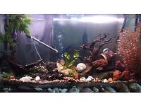 200 Litre Glass Aquarium with Decorations - 117cm x 61.5cm x 30.5cm - Collection only