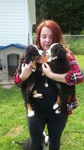Service de garderie pour votre animal de compagnie Saguenay Saguenay-Lac-Saint-Jean image 6