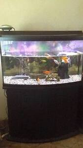 PRICE REDUCED!!! 47G bowfront tank open to offers