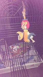 grande cage sur roulette