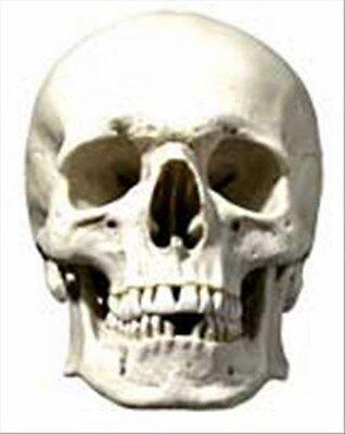 Scary Skull Halloween Fun CARD Single Party Face Mask ()