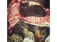Half terms and Easter holidays Dog and Cat Sitter/ House Sitting.