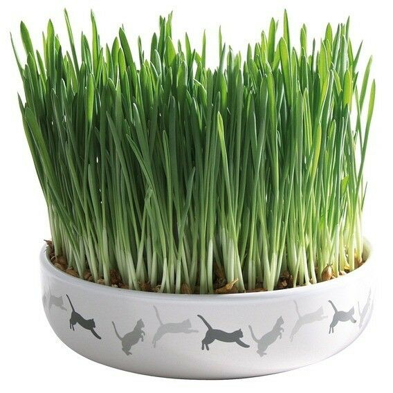 Ceramic Bowl 1 x Pack Of Cat Indoor Grow Your Own Kitty Pet Grass 42341 Cats